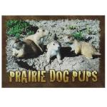 PRAIRIE DOG PUPS POSTCARD
