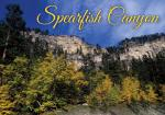 SPEARFISH FALL COLORS POSTCARD