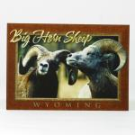 WYOMING BIG HORN SHEEP POSTCARD