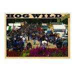 HOG WILD IN HULETT POSTCARD