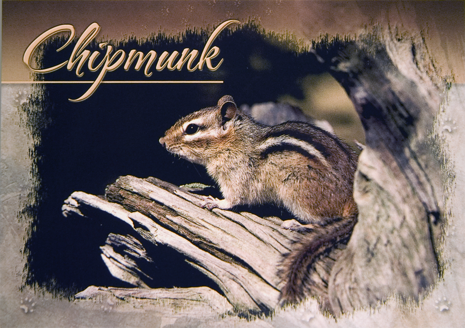 CHIPMUNK POSTCARD